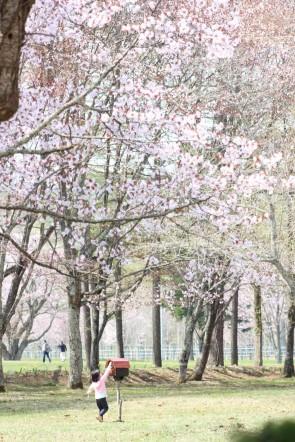 桜の木の下でIMG_6801