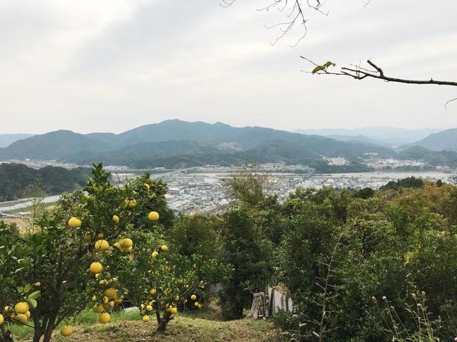 仁淀川を一望できる山の畑。そばには文旦の木も。