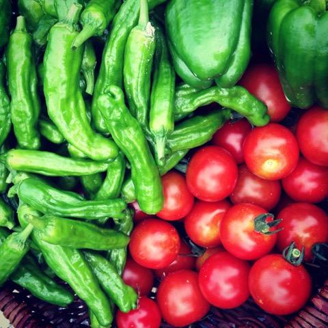 とれたての光るお野菜。