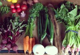 友人や知人に不定期で送るお野菜便。