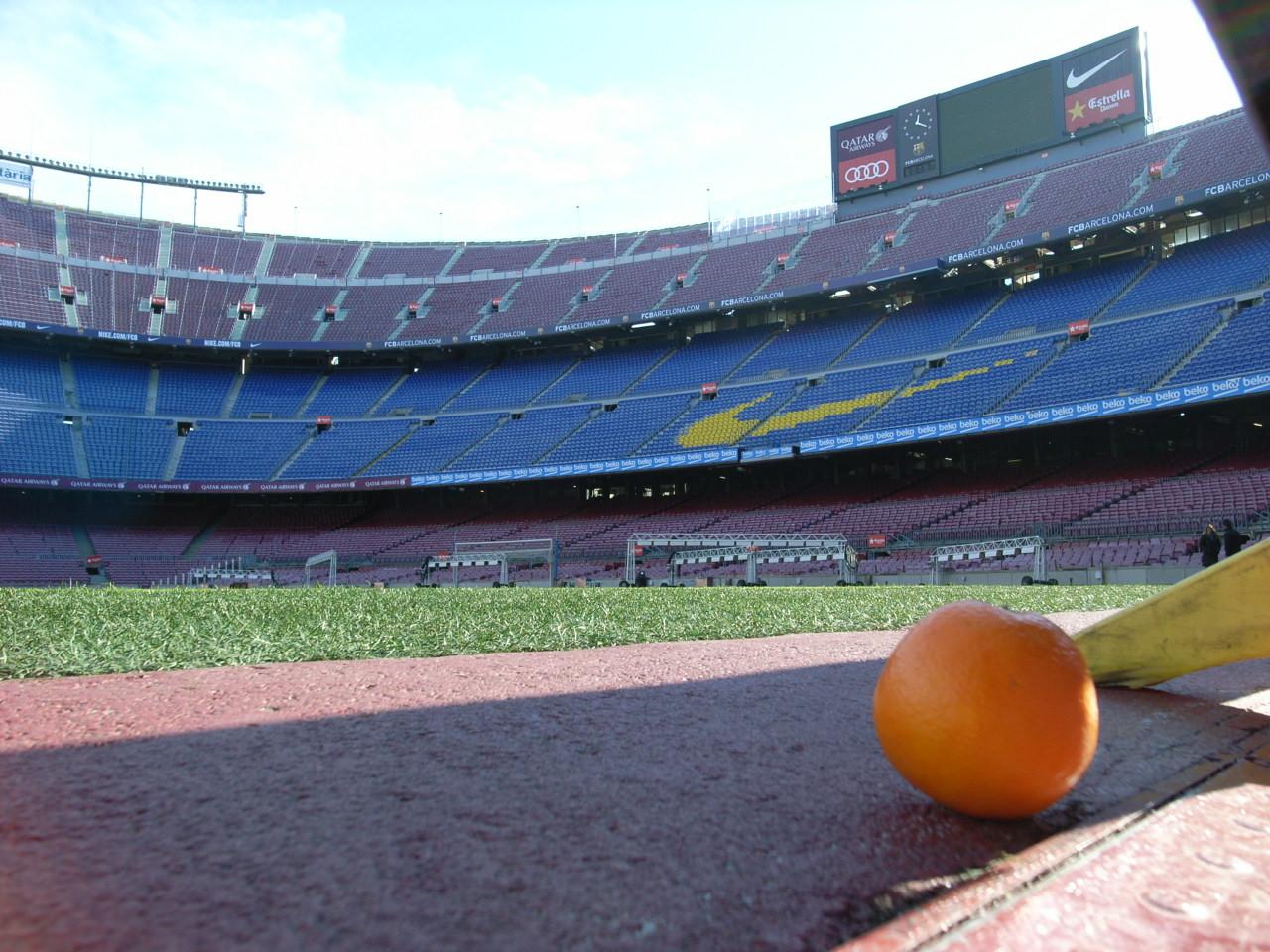 春みかんの挨拶/Greeting of Spring Valencia Orange