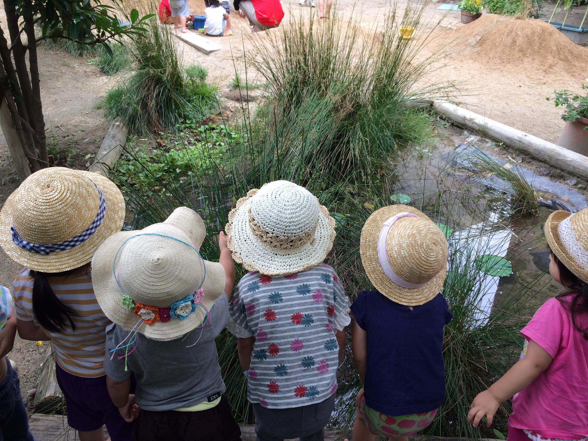 ビオトープの生き物を観察する子どもたち