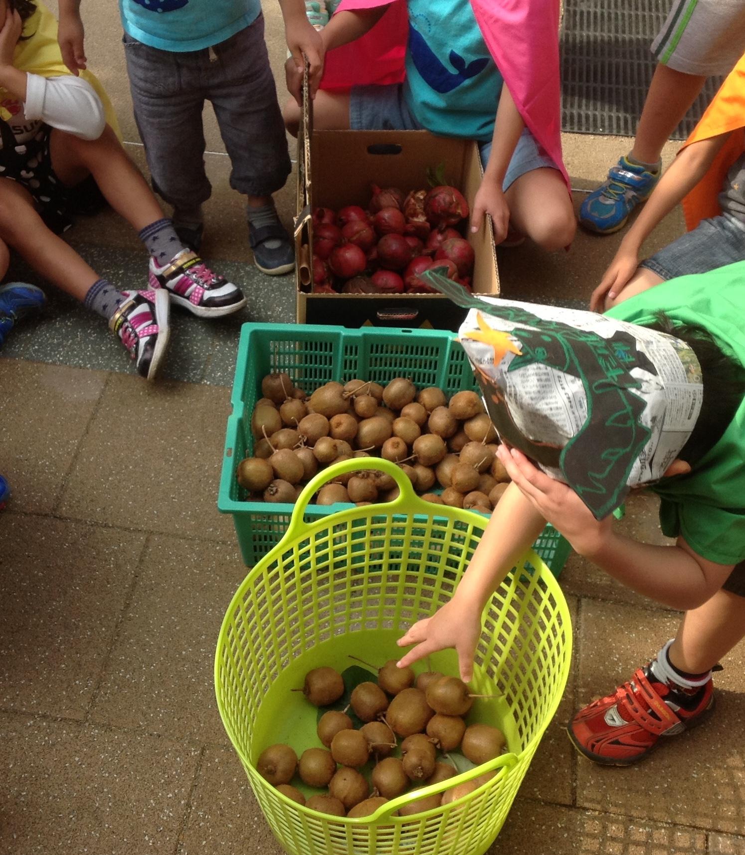 園庭で収穫したキウイフルーツ(100個以上)とザクロの実(70個以上)