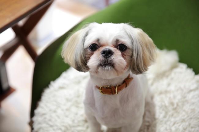 石川さんの愛犬・リンタくん。町家在住歴は約1年