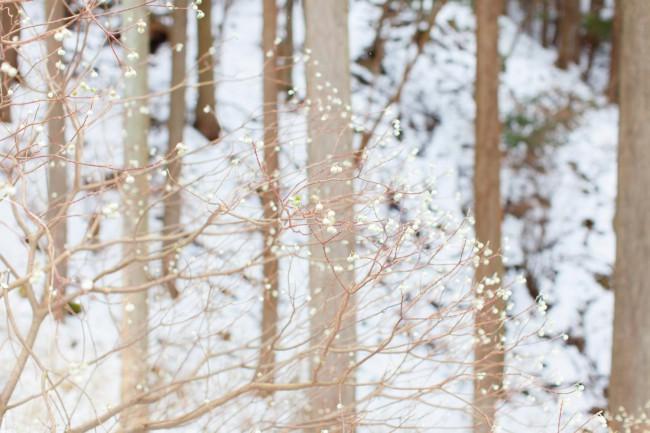 延東さんの山に植えられたミツマタの木。ミツマタを使った和紙づくりに取り組む移住組の若者にも一部、分配している