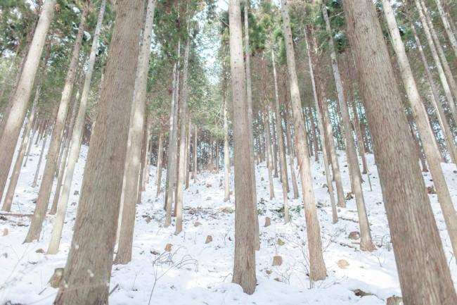 祖父の甚太郎さんから受け継いだ樹齢85年以上の美しいヒノキたち