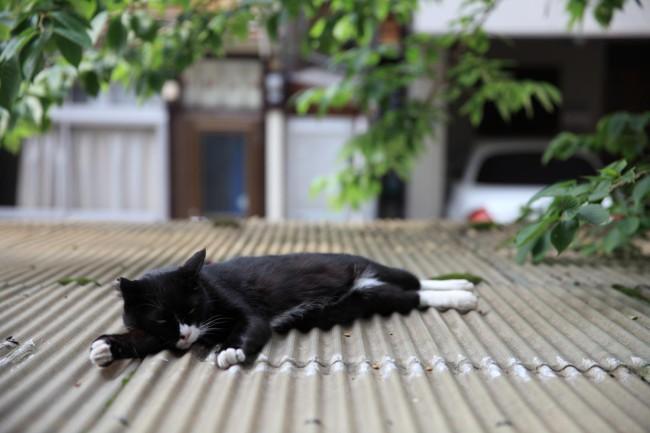 デザビレに住む「長谷川さん」。静かに熱い空間で、なごませてくれる存在だ