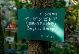 東山植物園の樹名板。