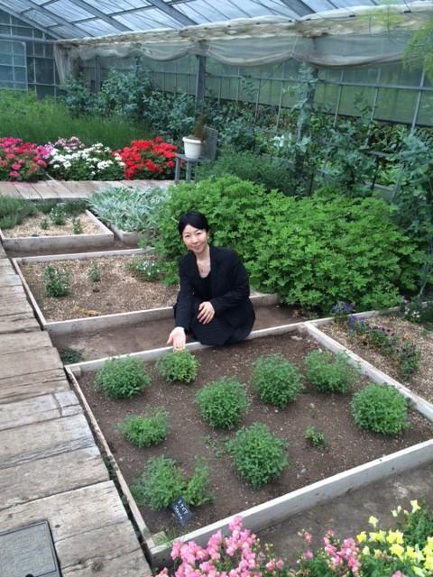 キャプション:調味料となる植物を摘んで試食する食育を企画し、ビニールハウスを視察する高久さん。