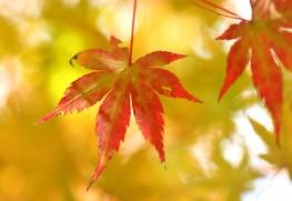 秋の貴重な機会をお見逃しなく