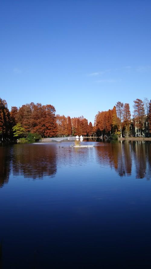 浦和画家が愛した別所沼と、日比野克彦《種は船プロジェクトinさいたま》