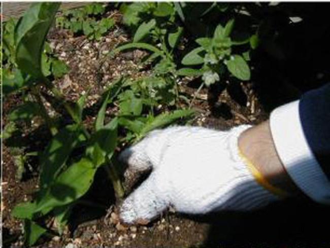 変化を見つけると自然と植物に手がのびる