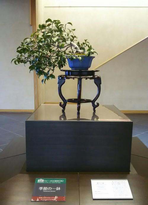 エントランスを飾る季節の一鉢。椿、銘「玉之浦」