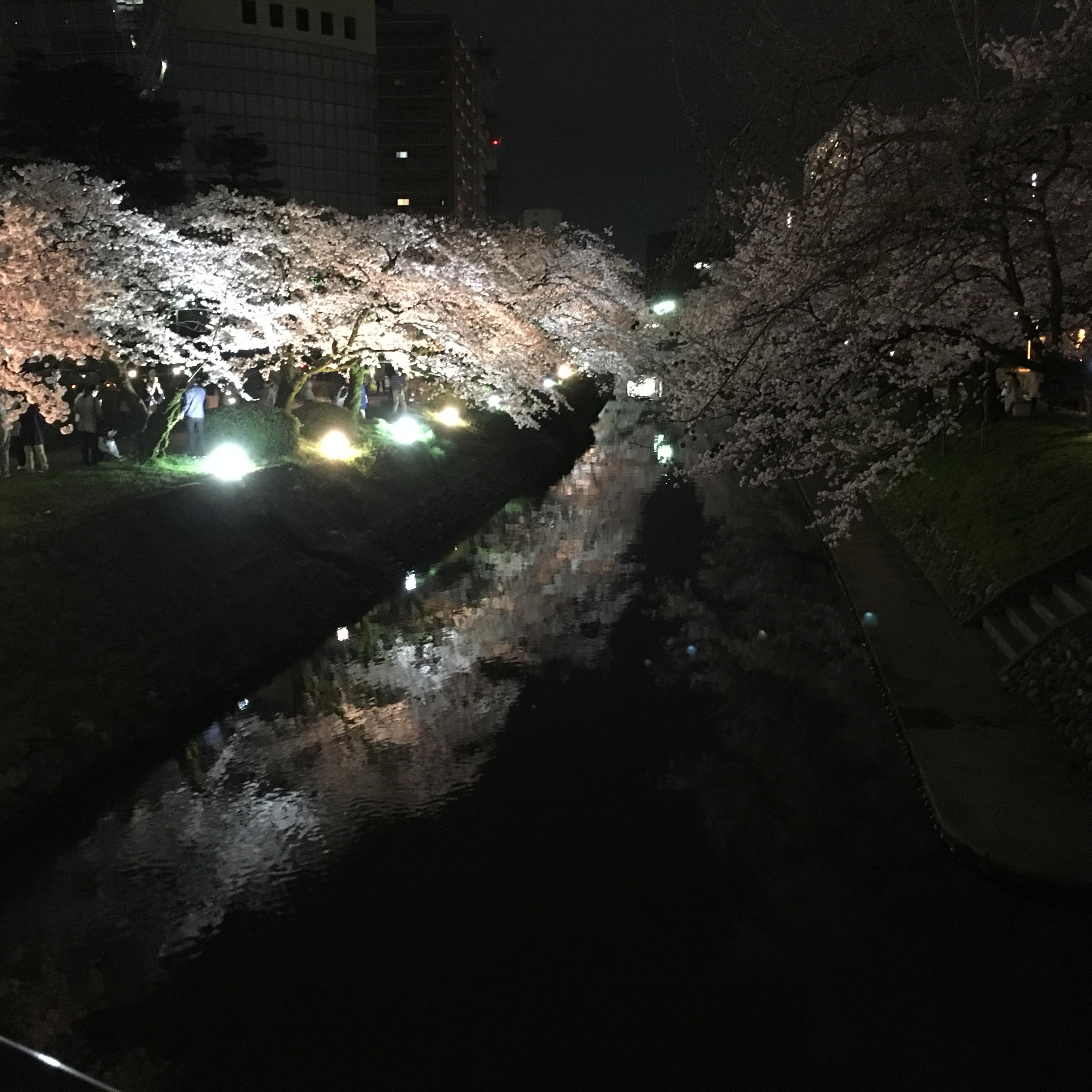 松川の夜桜。川面に映り込む桜がとても綺麗です