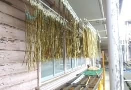 「小川町和紙体験学習センター」(旧埼玉県製紙工業試験場)での楮さらしの様子
