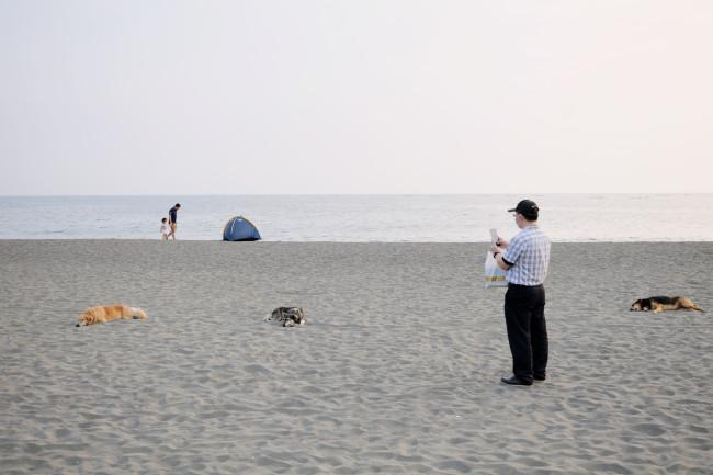 漁光島芸術祭のメイン会場となった浜辺 / 島の伝統的な産業である牡蠣養殖に使われた廃材を再利用した作品 / 国立台南芸術大学の建築藝術研究所による《鯤》/ あちこちに寝転がっている犬たちも、作品の一部のよう