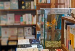 店内の様子 本と金魚 Photo:とほん