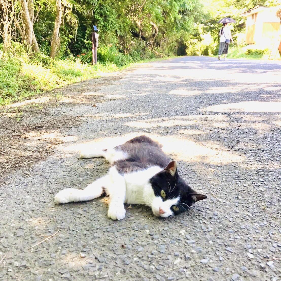 道のまん中で猫が寝ころんでいます
