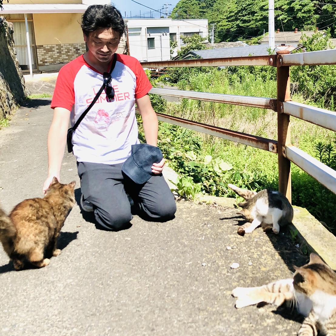 観光客に群がる猫たち