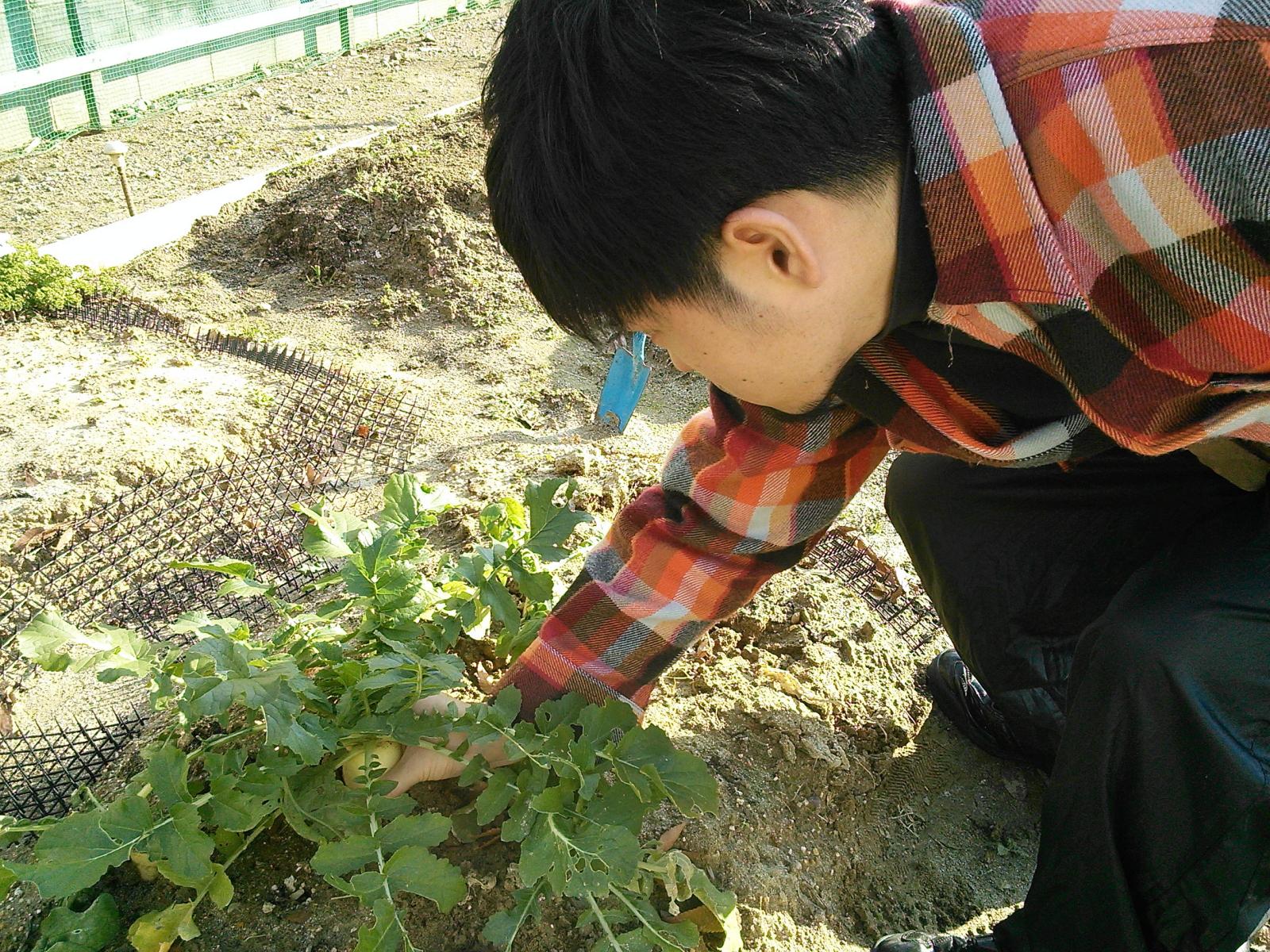 2013年〜17年収穫NCM_0346