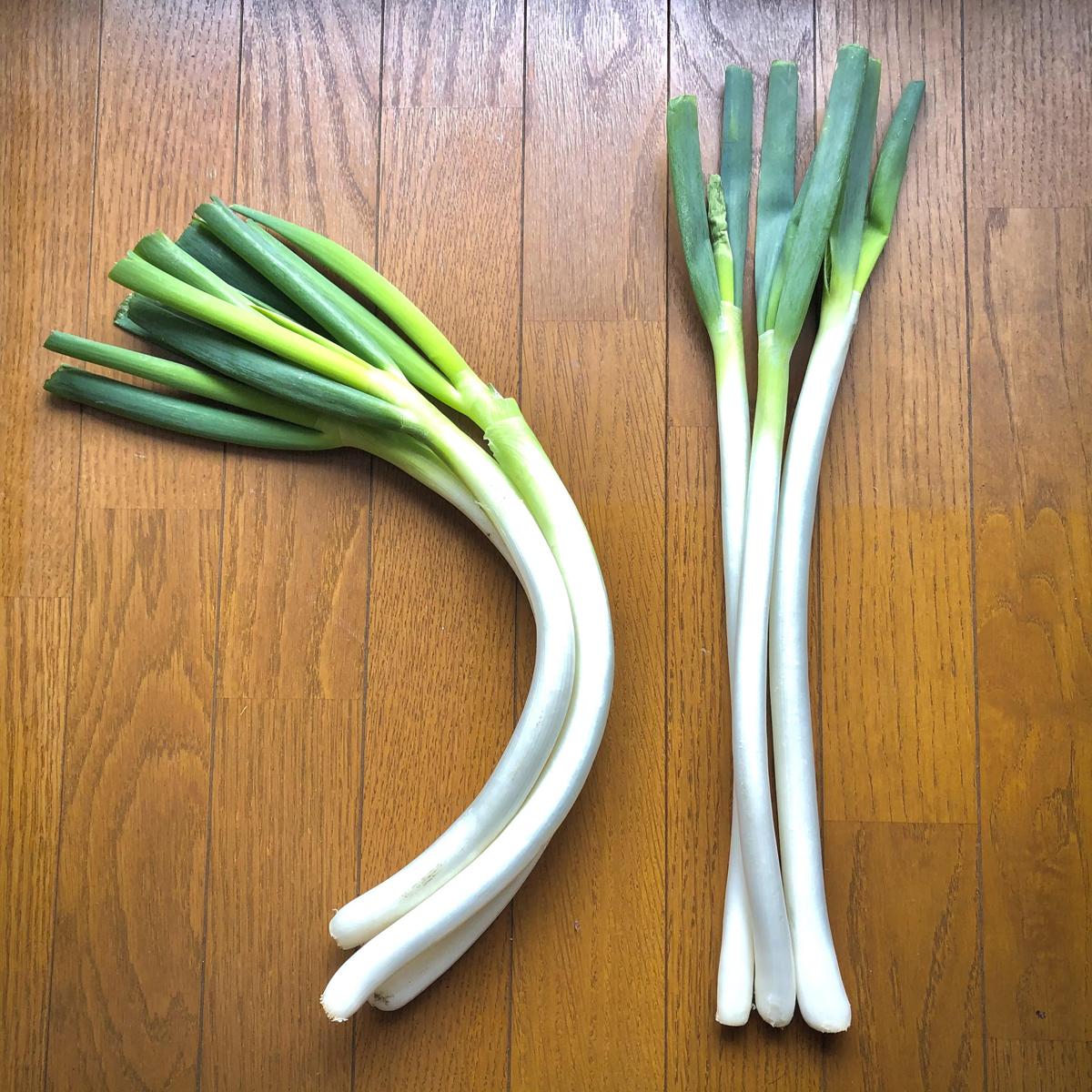 通常の葱(右)と仙台曲がり葱(左)